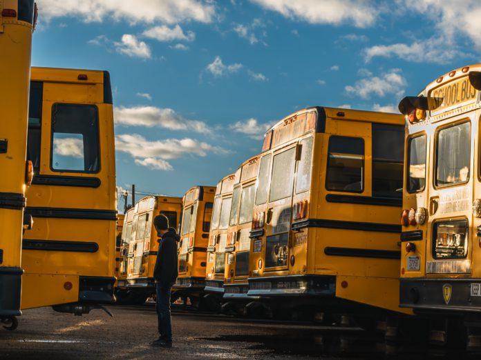 Man standing between school busses
